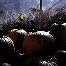 Greenhouse Pumpkins by Wayne King