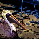 Pelican Puppet by Wayne King
