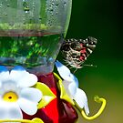 Butterfly on Hummer Feeder by TJ Baccari Photography