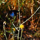 Blue Butterfly in Flight by BellaStarr
