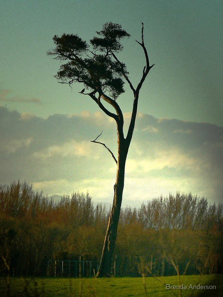lone tree by Brenda Anderson