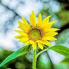 Sunflower Bokeh by Kay Brewer