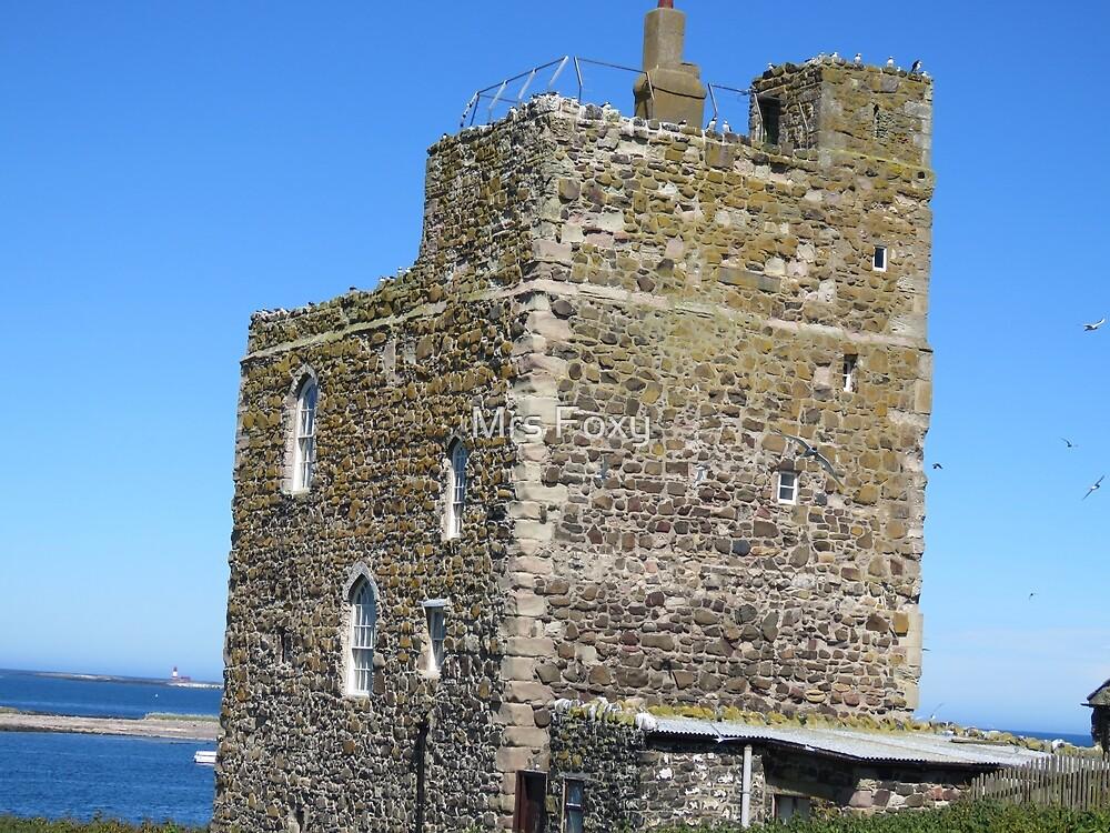 Farne Isles by Mrs Foxy