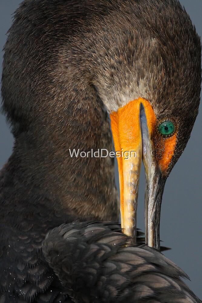 Shy Cormorant by WorldDesign