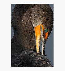 Shy Cormorant Photographic Print