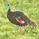Impressionist Ocellated Turkey by Sarah Countiss