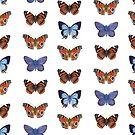 Butterflies by Tamara Clark