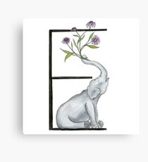 E is for Elephant ad Echinacea Animal and Flower Alphabet  Canvas Print