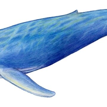 Blue Whale by edenart