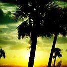 Coastal Palm Trees by Jonicool