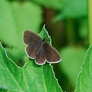Another fine moth you got me into by dougie1