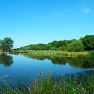 Another Lake at Margrove by dougie1