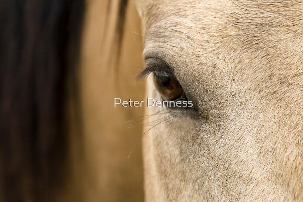 Eye of Banjo by Peter Denness