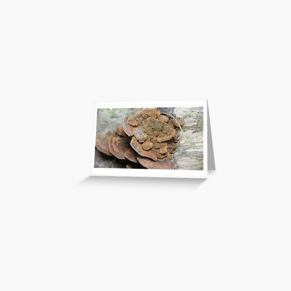 Brown Fungi Greeting Card