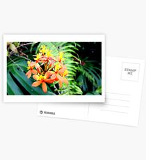 Orchids of the Yellow and Orange Kind Postcards