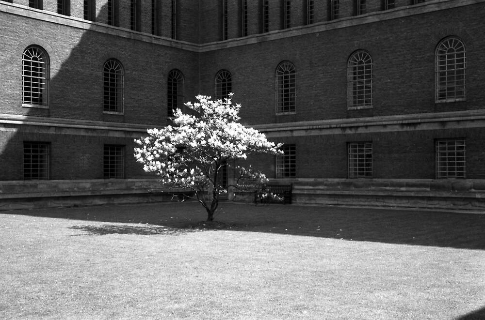 University Library Magnolia 1960 by Priscilla Turner