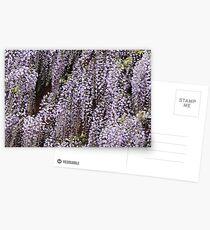 Wisteria Cascades Postcards
