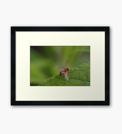 Colorful Winged One Framed Print