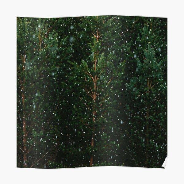 Neige sur les arbres Poster