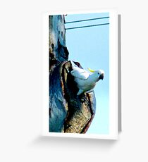 Good day mate  Greeting Card