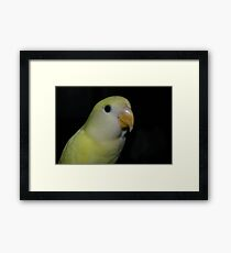 love bird Framed Print