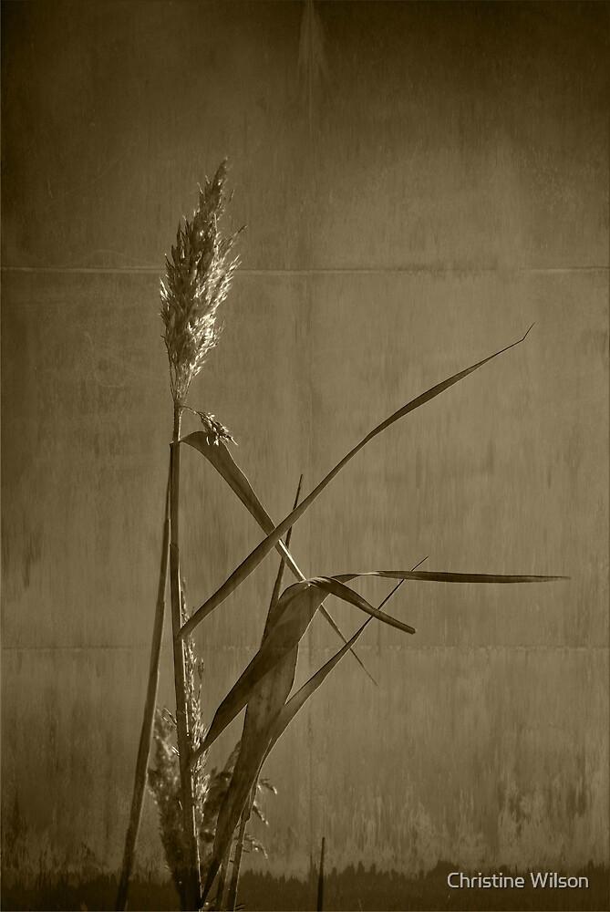 Long Grass  by Christine Wilson