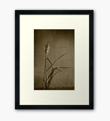 Long Grass  Framed Print