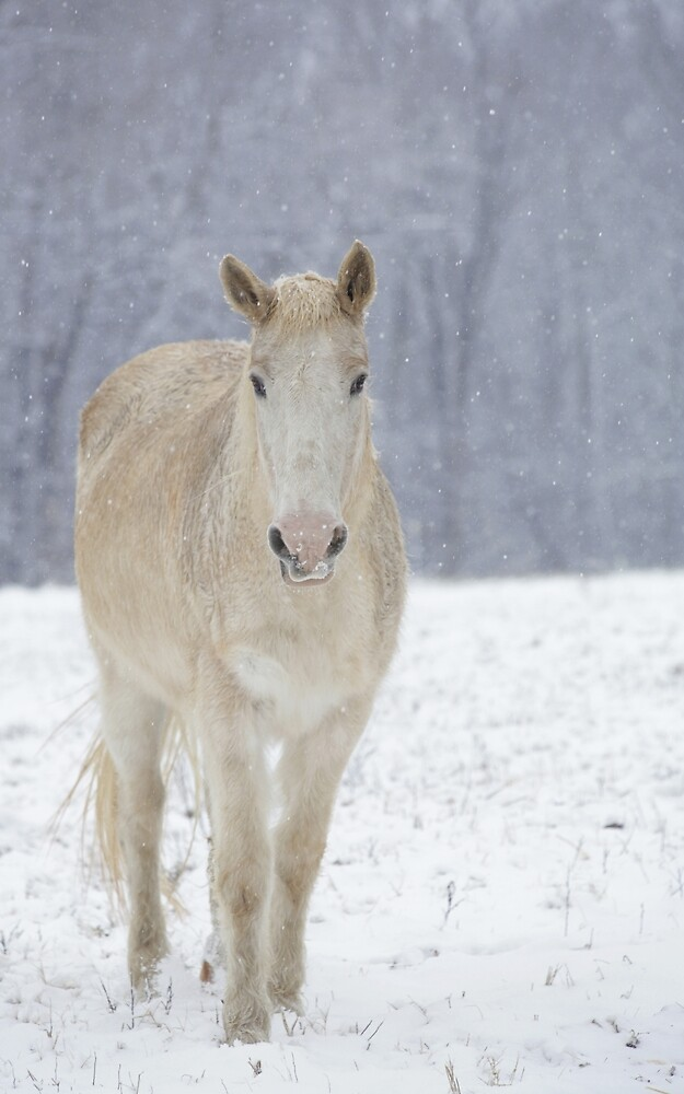 White Horse in the Snow by StampCity