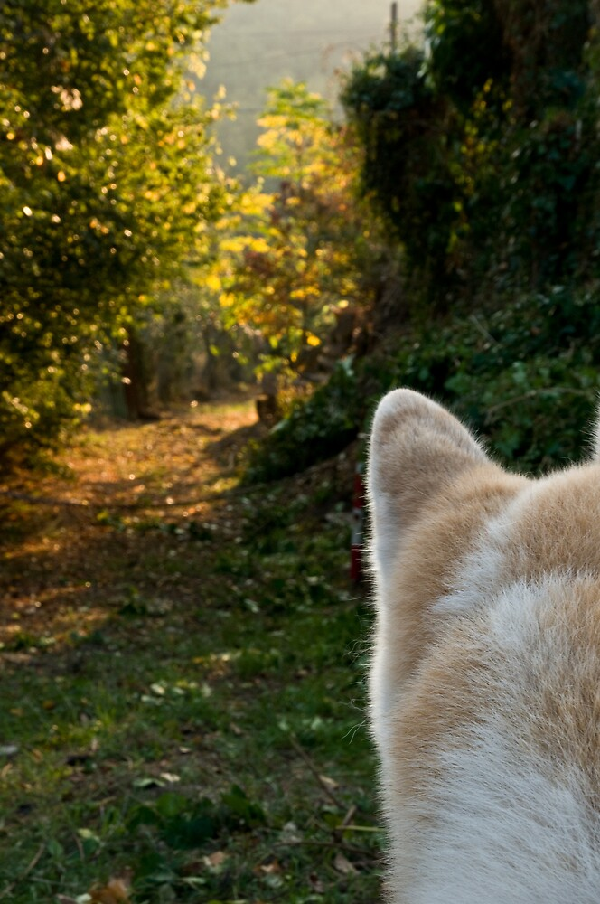 The path and the onlooker by Ilva Beretta