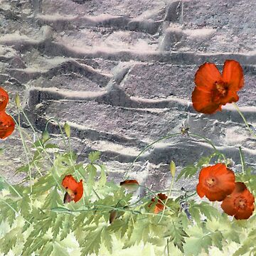 wall poppies by mindgoop
