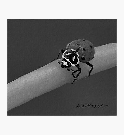 Red Hot Lady 2   ( Ladybug Series ) Photographic Print