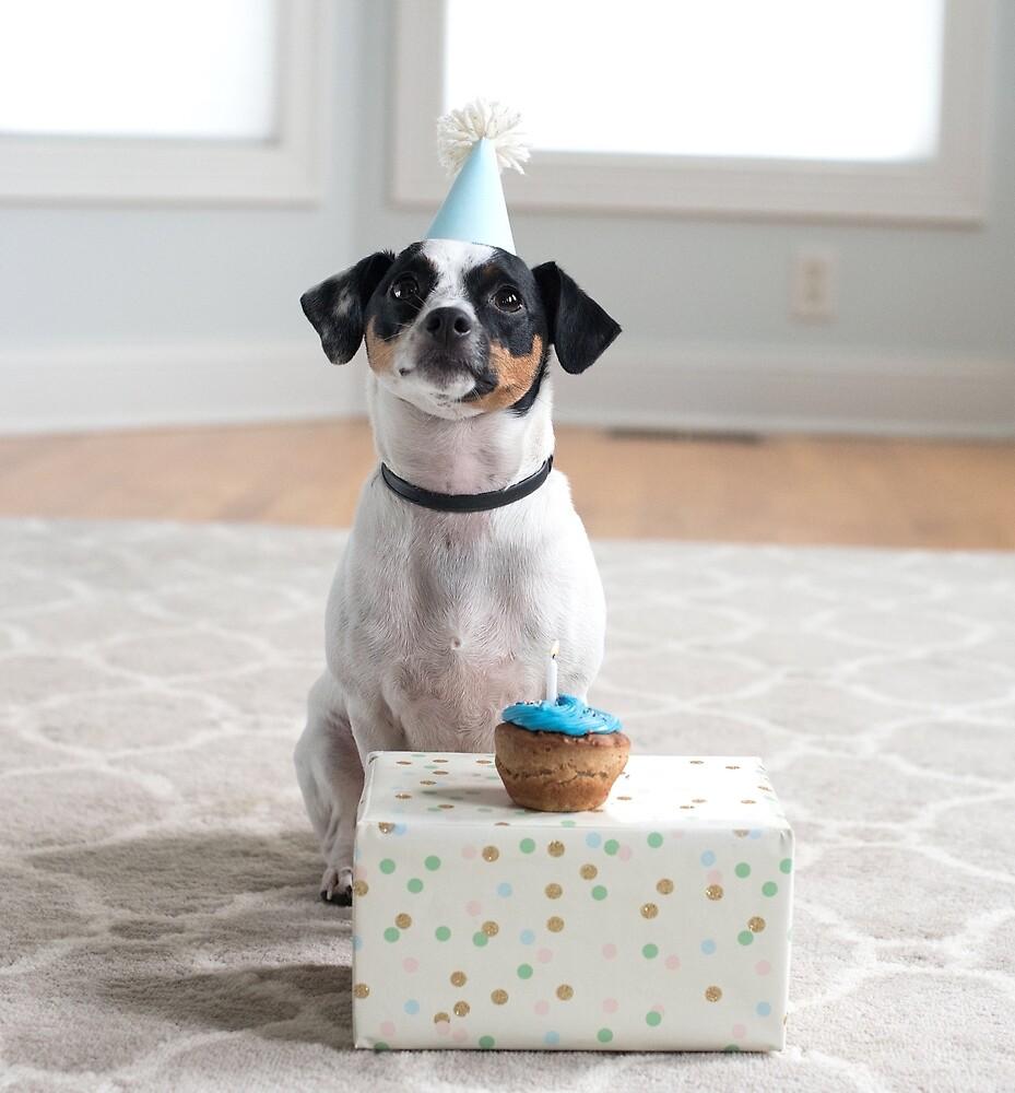 Cute dog on his birthday by mongero