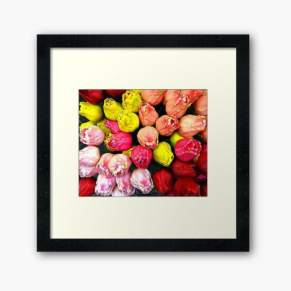 Amsterdam Tulips  Framed Art Print