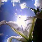 Sun lily refubished by Kimberley Davitt