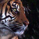 Tiger, Tiger by Wayne Gerard Trotman
