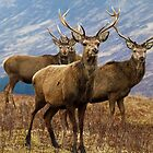 The four stags on the loch by leeannelowe