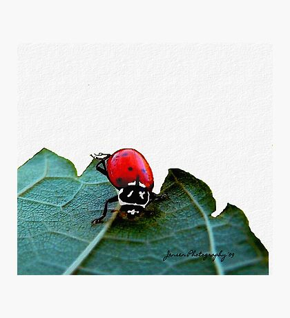 Put Your Right Legs Out...... And Shake Them All About   ( Ladybug Series ) Photographic Print