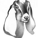 Nubian Doe Kid 3 by Patricia Howitt