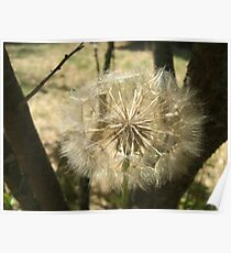 Seed Globe Tree Poster