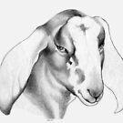 Nubian Doe Story by Patricia Howitt