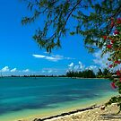 Another Awesome Anegada Beach by DARRIN ALDRIDGE
