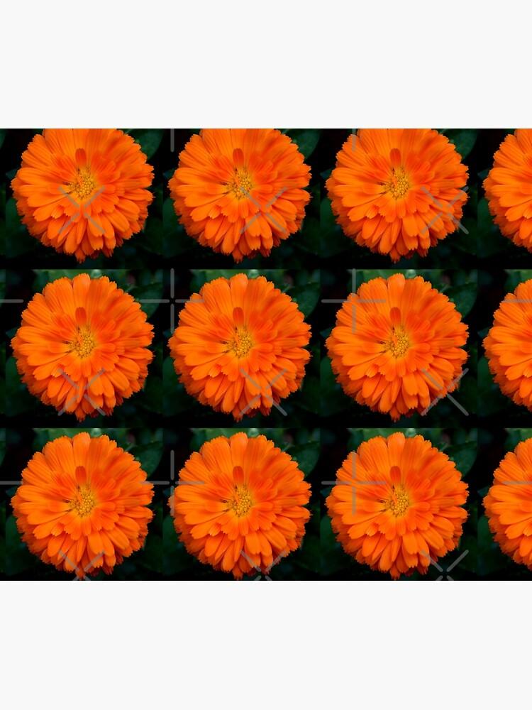 Orange Spray by claytonbruster