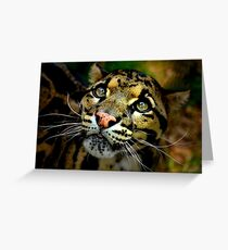 ~Clouded Leopard~ Greeting Card