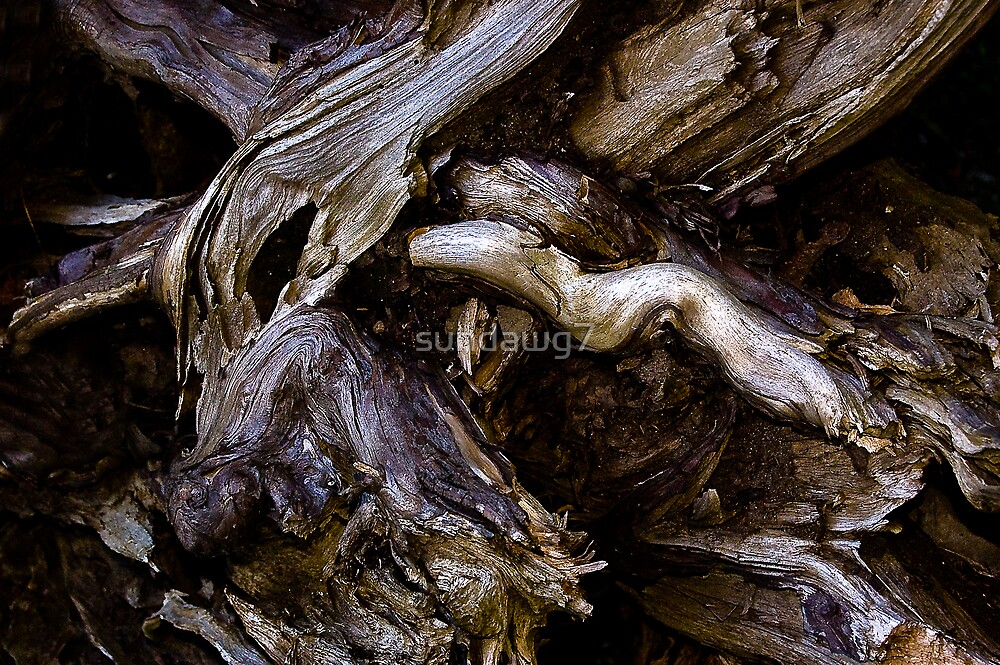 Driftwood Detail_2 by sundawg7
