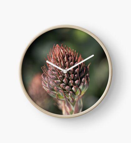 Succulent Bud Clock