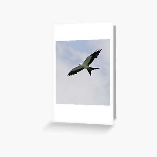 Swallowtail Kite Greeting Card