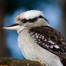 Kookaburra by margotk