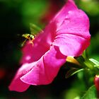 Hoverfly & Petunia by Wayne Gerard Trotman