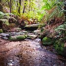 Cataract Creek in Blue Mountain's Wilderness  by Danielasphotos