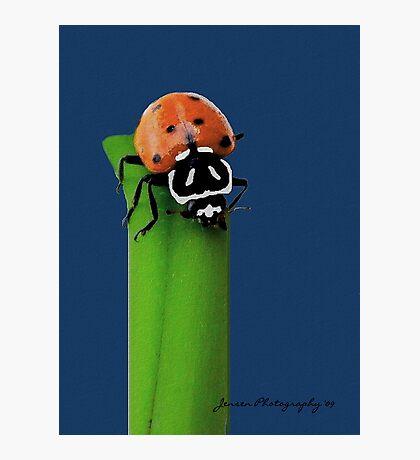The Classic Lady        ( Ladybug Series ) Photographic Print